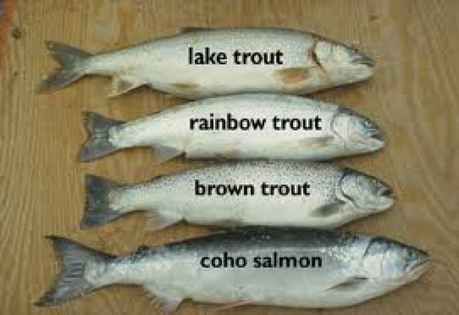 Wisconsin Trout Season Looks to be a Good One